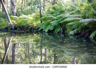 Still life of water fern and forest at Denmark in summer