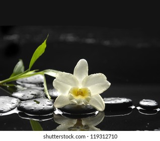 Still life with white orchid and bamboo on black stones