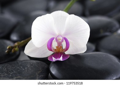 Still life with white orchid with zen stones