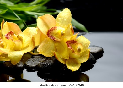 still life with yellow orchid and bamboo leaf on pebbles