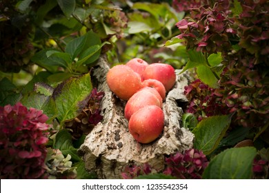 still live of apples and hortencia