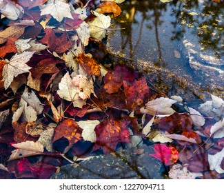 A still part of a creek where autumn leaves collected under the crystal clear water.  reflections of the surrounding trees can also be seen in the water