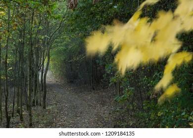 Still pathway in the dark forest in autumn