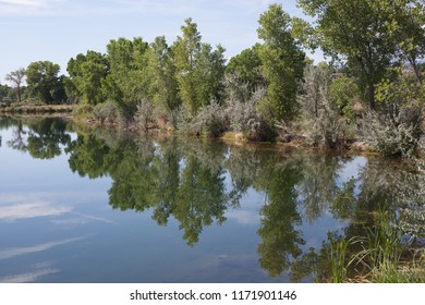 Still waters of a western Colorado lake reflect cottonwoods on the shore.