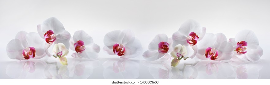 Stillife of white orchids in a row against a white backdrop