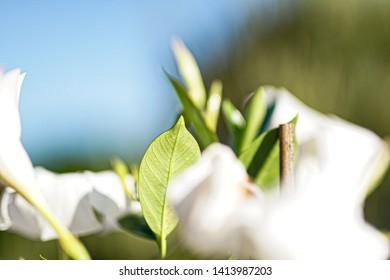 Stilllife plant on sunny day 1