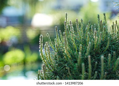 Stilllife plant on sunny day 2
