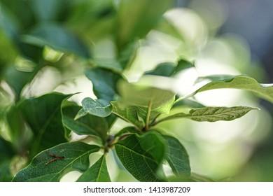 Stilllife plant on sunny day 3
