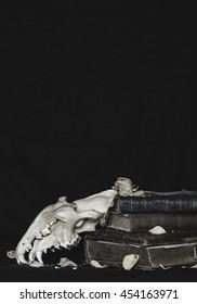 Still-life skull