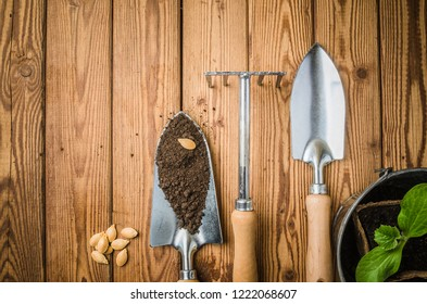 Still-life with sprouts and the garden tool, the top view