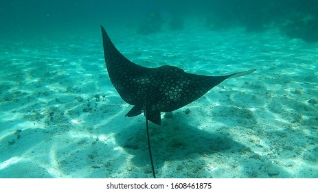 sting rays in Caye Caulker, Belize