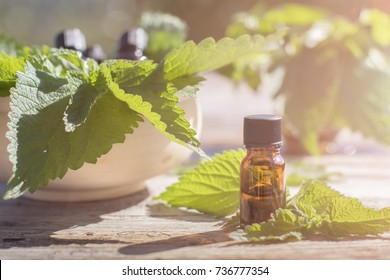 Stinging Nettle Essential oil (Urtica Dioica) Spa Phytotherapy Aromatherapy Healing Herbs Homeopathy Alternative Medicine Concept Medical Herb Health Beauty Rustic Vintage Wooden Background
