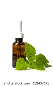 Stinging nettle leaves and tincture isolated on white