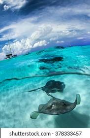stingray city - Cayman Island