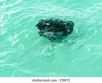 Stingray at Stingray City - Cayman Islands