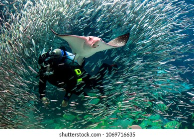 Stingray City. diver fish and stingrays seoul