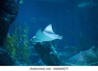 Stingray grand adventure under ray wild