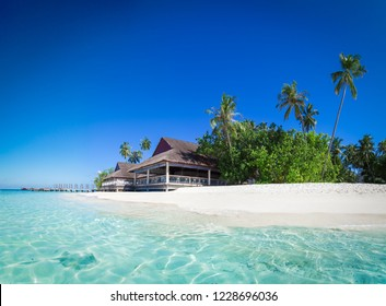 Stingray on the Maldives. Tropical island in the turquoise lagoon. Maldives island