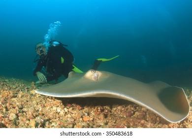 Stingray and Scuba Diver