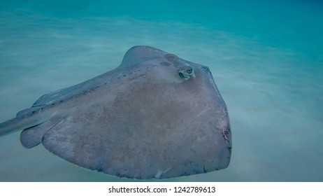 Stingray swiming. Exposure done in the Grand Cayman, Cayman Islands.