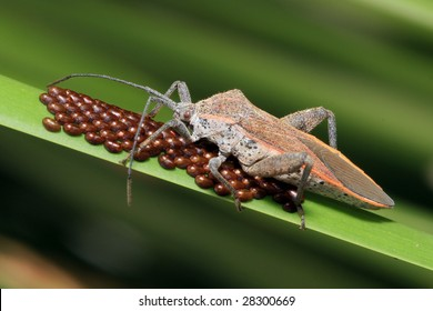 Insect Eggs Images, Stock Photos & Vectors | Shutterstock