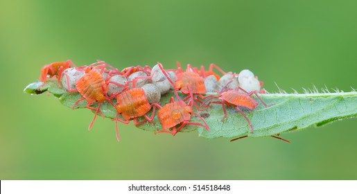 Stink Bugs Images, Stock Photos & Vectors | Shutterstock