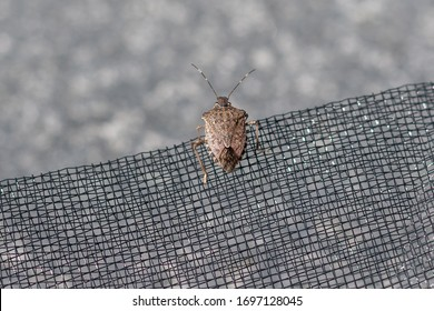stink bug on insect net - bug plague in summer