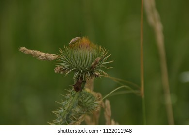 Stinky bug on Flower Burdock