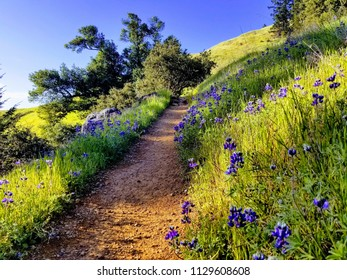 Stinson Beach Trail
