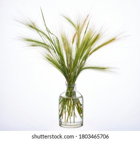 Stipa (feather grass, needle grass or spear grass) in a glass vessel with water