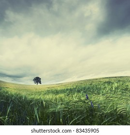 Stitched Panorama of solitude tree in agricultural field