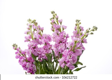 Stock Flower Images Stock Photos Vectors Shutterstock
