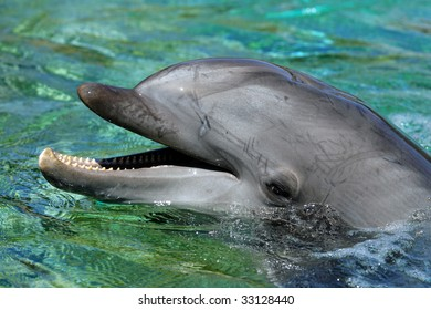 Stock image of dolphin
