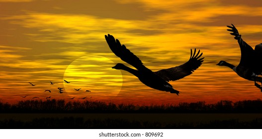 Stock image of geese in flight at sunset