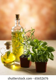 stock image of the olive oil and herb plant