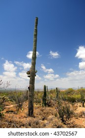 Stock image of Saguaro National Park, USA