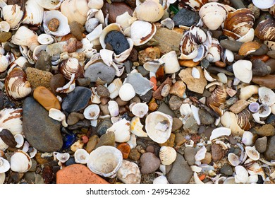 Stock image showing sea shells and pebbles on the banks of  the River Rhine in Germany