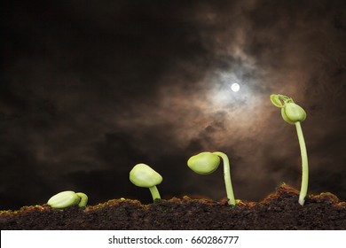 stock image of the small plant growing with moon light