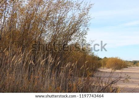 пустынный песчаный пляж на ладожском озере осенью в солнечную погоду Сток-фото ©