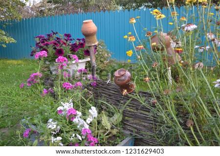 Природа, растет, цветы, красиво, ярко, лето, забор, изгородь, плетеная, листья, горшки, деревня, двор Сток-фото ©