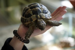 A beautiful little turtle in the palm of your hand! Close-up.
