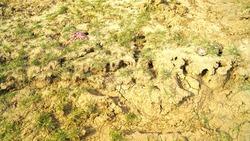 A beautiful Rough bump soil.