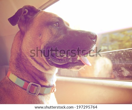 a boxer dog riding in a car done with a retro vintage instagram filter