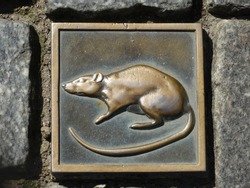 a bronze plate with a rat between the paving stones in the city of Hameln