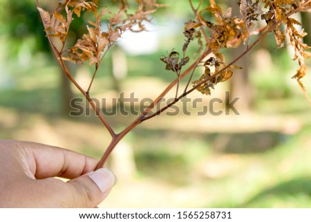 A brown branch that is dry and dry