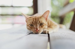 A brown cat lying on the wooden floor