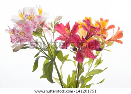 A bunch of wonderful alstroemeria flowers - stock photo