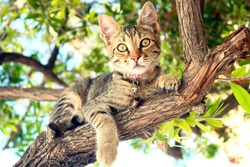 A Cat sitting on a tree