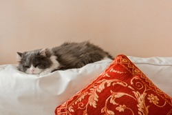 ,a cat that sleeps in house on the couch of the living room,
