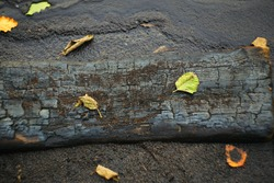a charred Board lies on a beach strewn with ash and yellow dead leaves on the riverbank at sunset